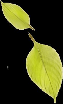 Neidhardt Galabau - Blätter