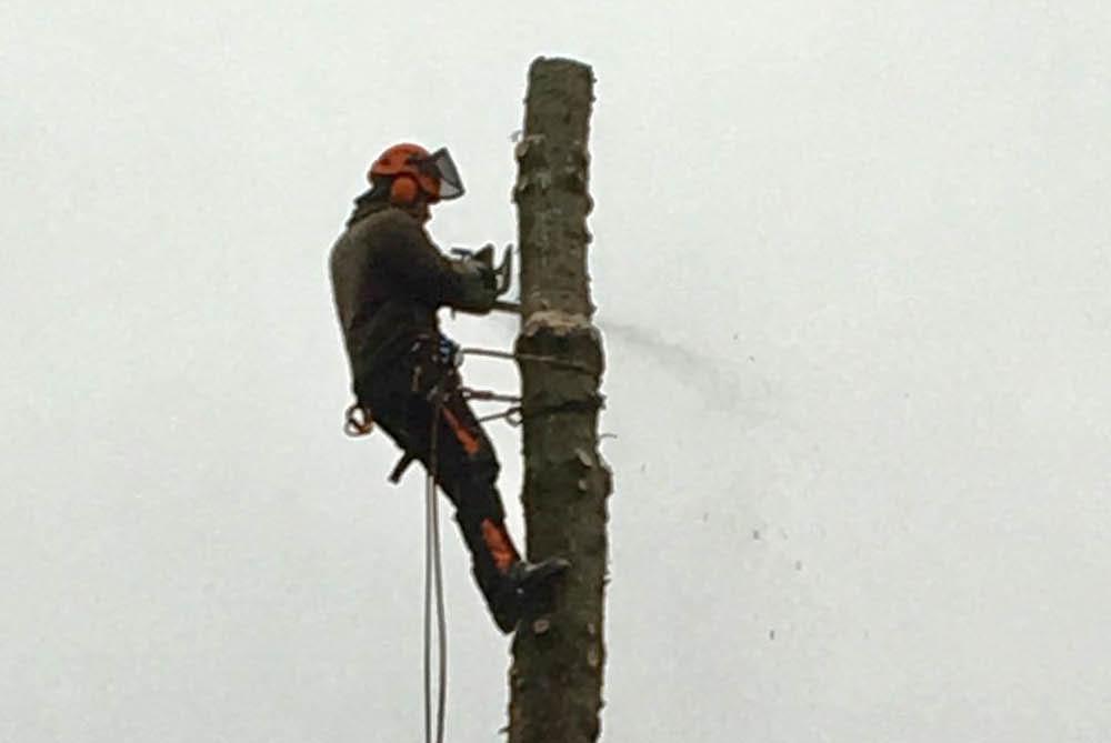 Baum und Gehölzarbeiten